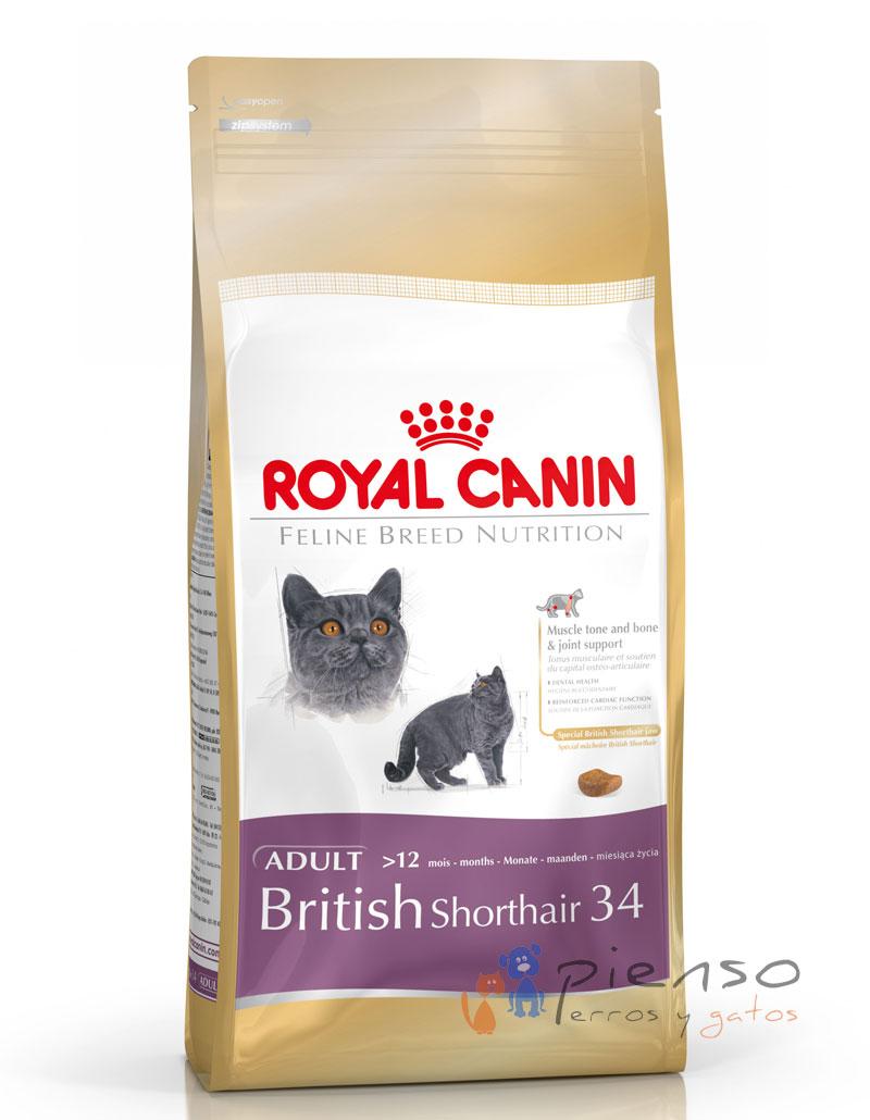 royal canin british shorthair comida para gatos. Black Bedroom Furniture Sets. Home Design Ideas
