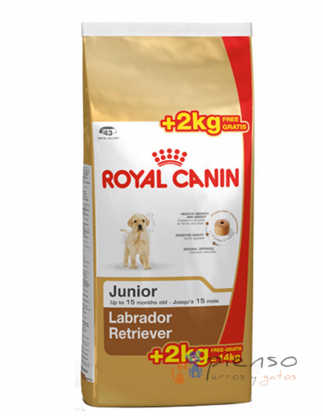 labrador retriever junior pienso para perros de la marca royal canin. Black Bedroom Furniture Sets. Home Design Ideas