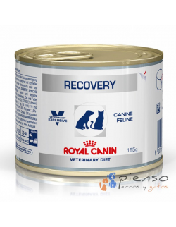 Royal Canin Pack 12 Latas Recovery Perros y Gatos